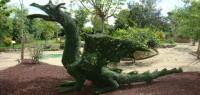 dragon-636x303