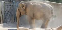 animales-elefante-04