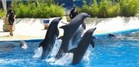 exhibiciones-delfines-01